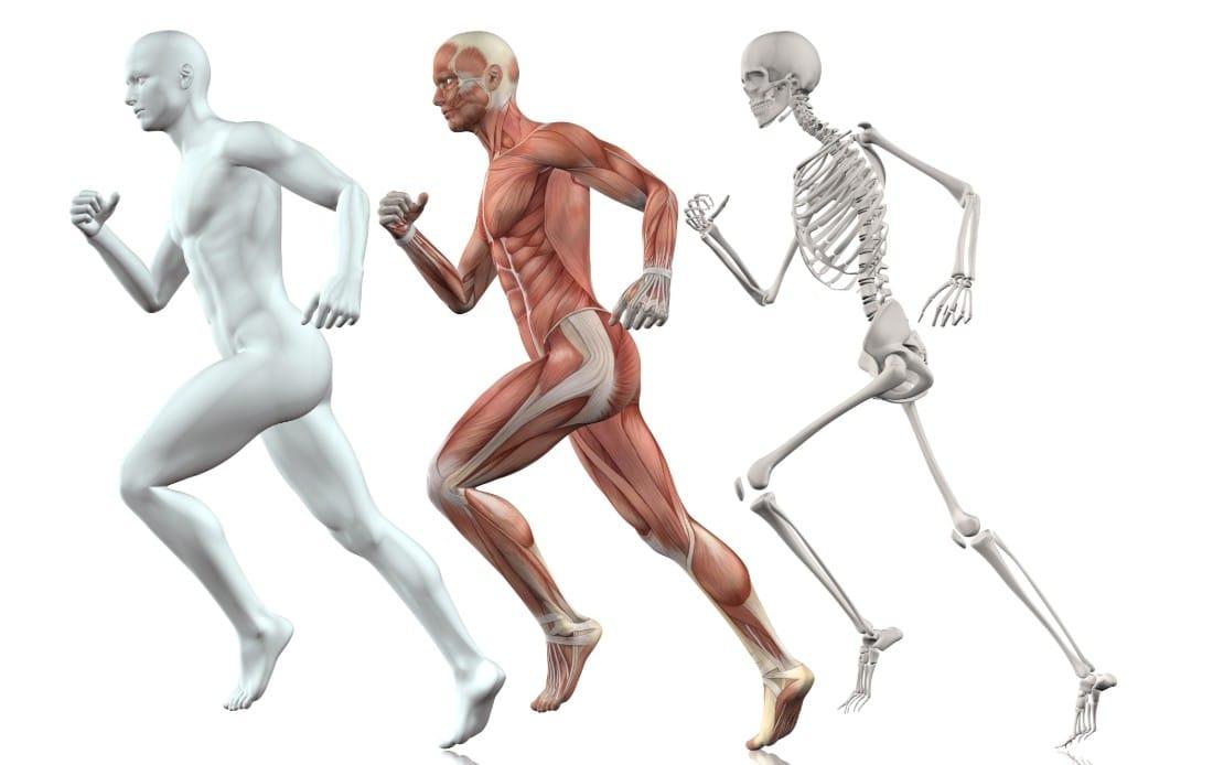 corpo fisico uomo