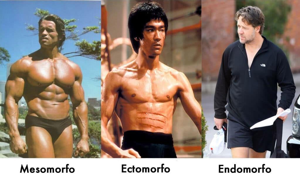 somatotipo endomorfo mesomorfo ed ectomorfo